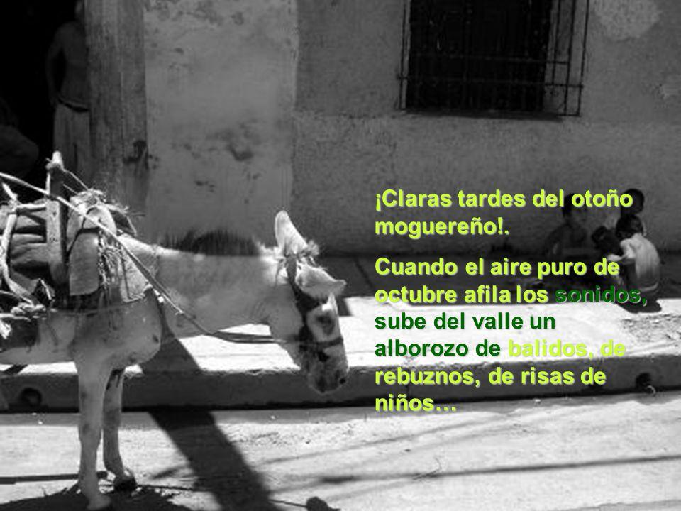 ¡Claras tardes del otoño moguereño!.