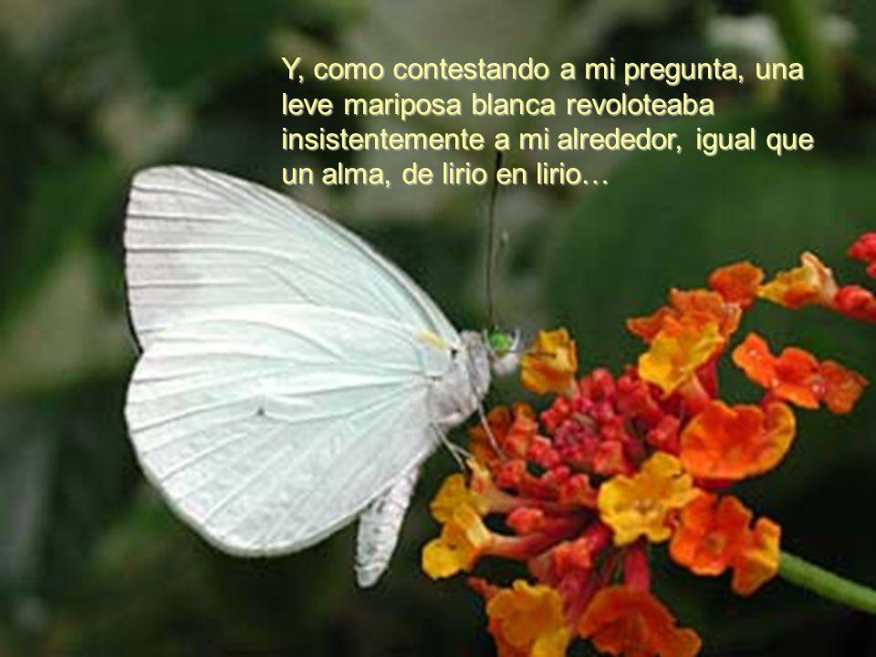 Y, como contestando a mi pregunta, una leve mariposa blanca revoloteaba insistentemente a mi alrededor, igual que un alma, de lirio en lirio…