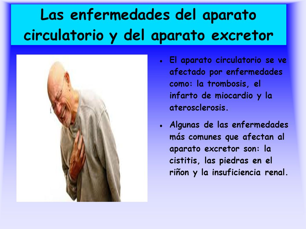 Las enfermedades del aparato circulatorio y del aparato excretor