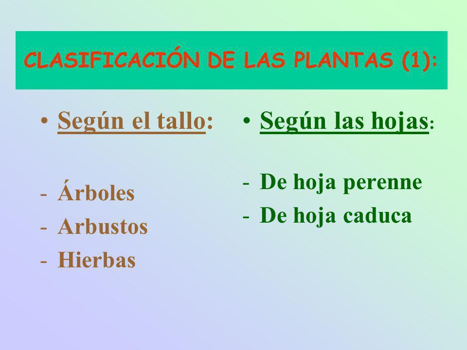 CLASIFICACIÓN DE LAS PLANTAS (1):