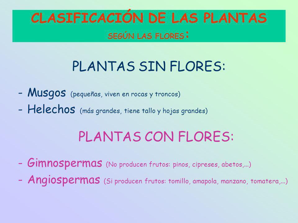 CLASIFICACIÓN DE LAS PLANTAS SEGÚN LAS FLORES: