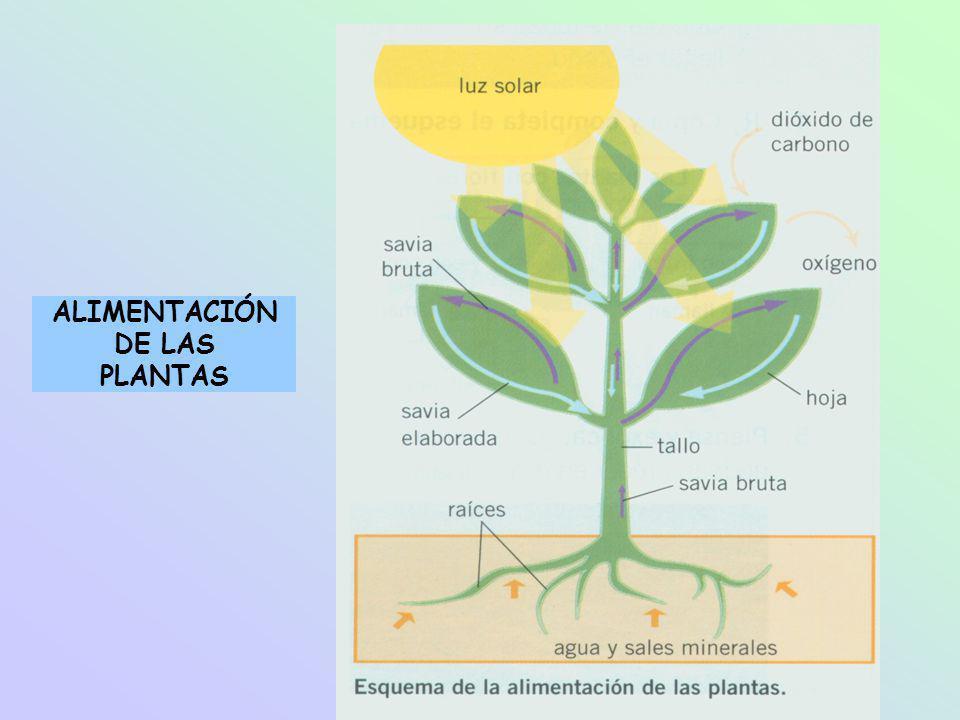 ALIMENTACIÓN DE LAS PLANTAS