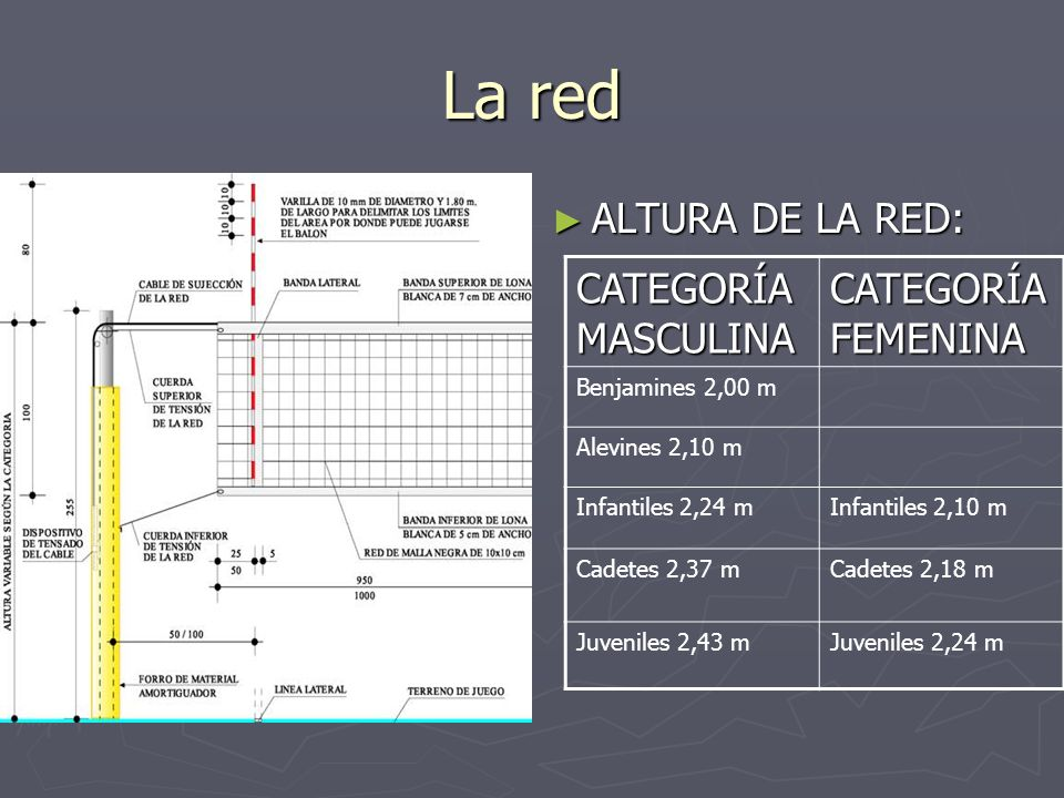 La red ALTURA DE LA RED: CATEGORÍAMASCULINA CATEGORÍA FEMENINA