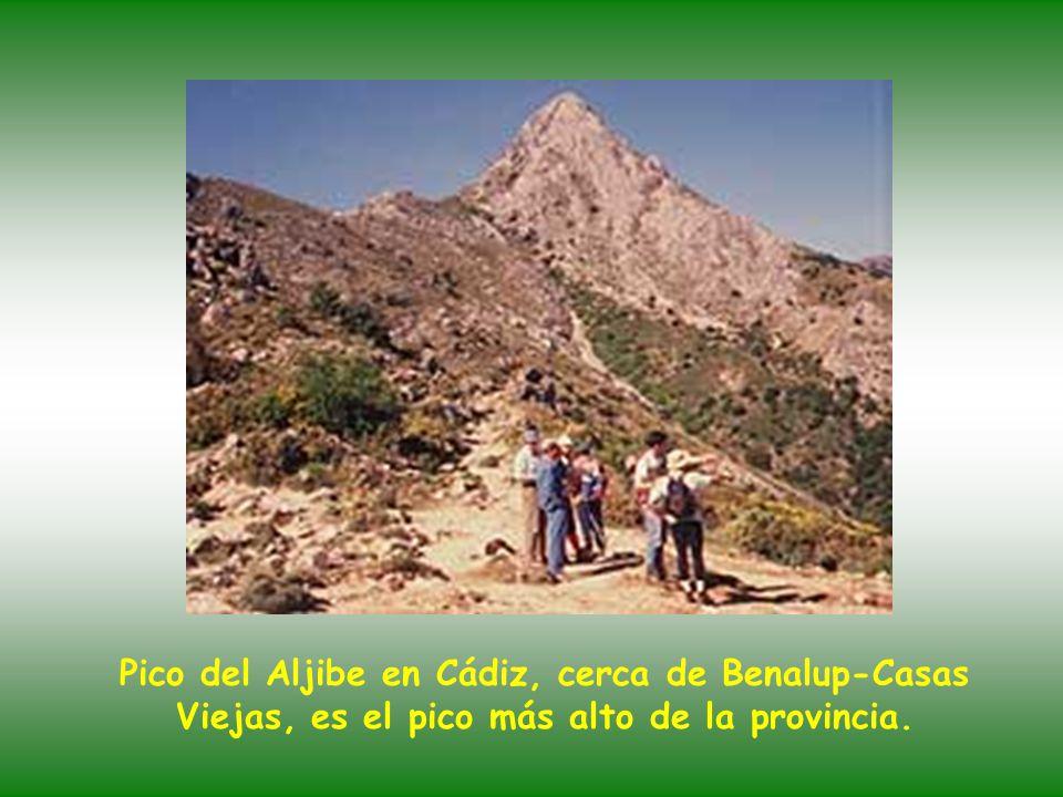 Pico del Aljibe en Cádiz, cerca de Benalup-Casas Viejas, es el pico más alto de la provincia.