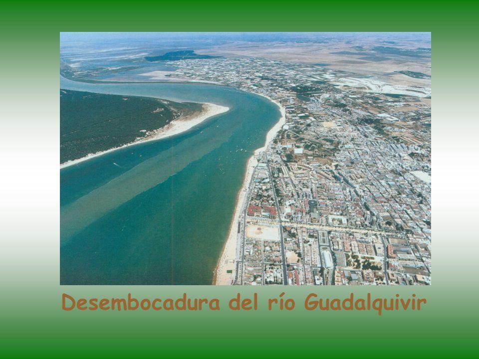 Desembocadura del río Guadalquivir