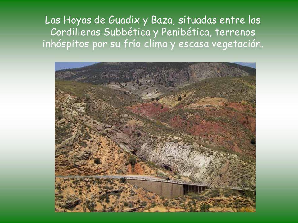 Las Hoyas de Guadix y Baza, situadas entre las Cordilleras Subbética y Penibética, terrenos inhóspitos por su frío clima y escasa vegetación.