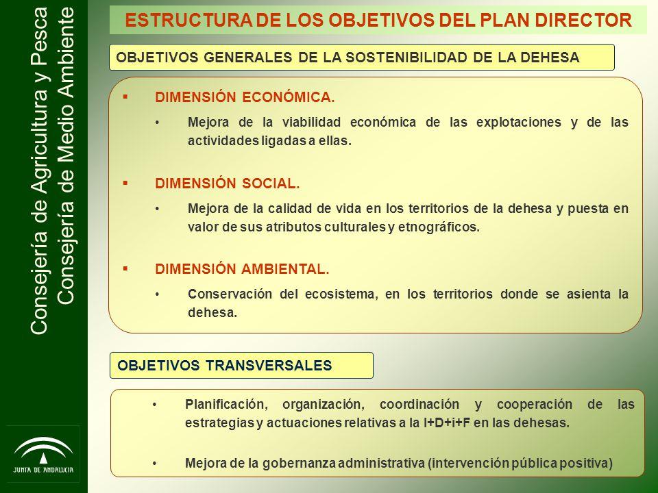ESTRUCTURA DE LOS OBJETIVOS DEL PLAN DIRECTOR