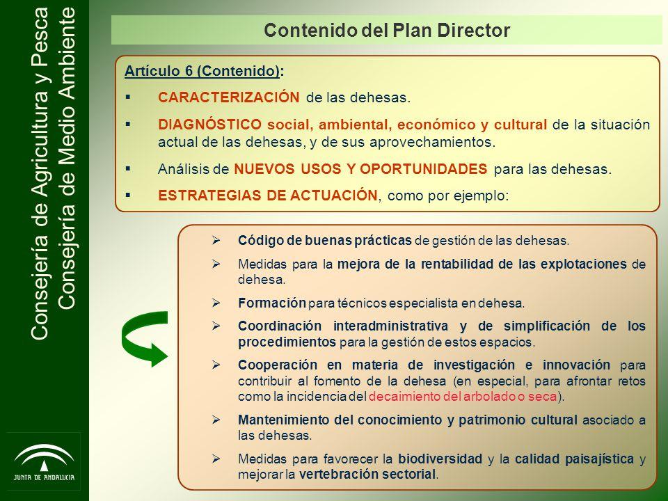 Contenido del Plan Director