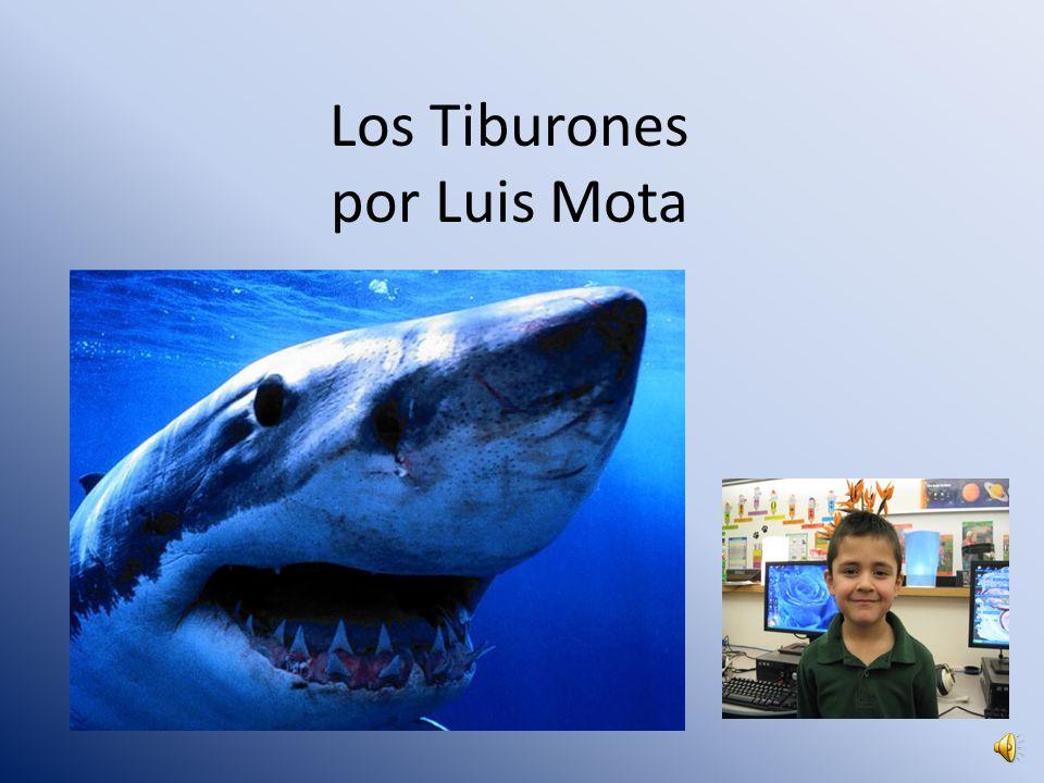 Los Tiburones por Luis Mota