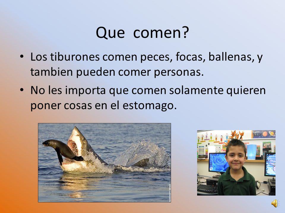 Que comen Los tiburones comen peces, focas, ballenas, y tambien pueden comer personas.