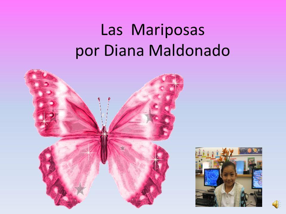 Las Mariposas por Diana Maldonado