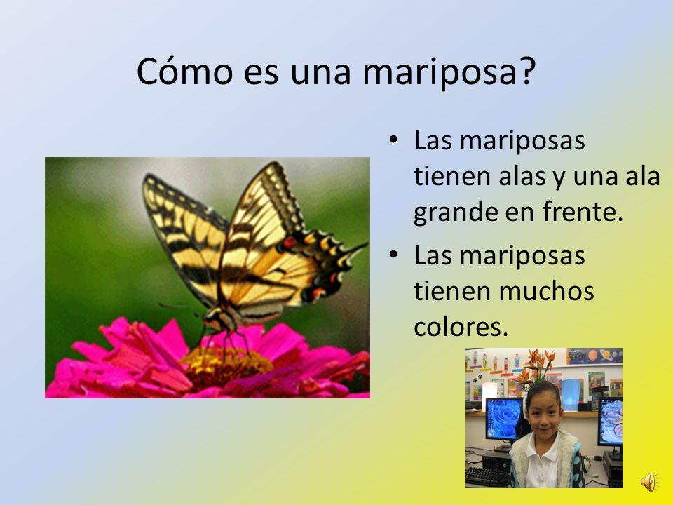 Cómo es una mariposa. Las mariposas tienen alas y una ala grande en frente.