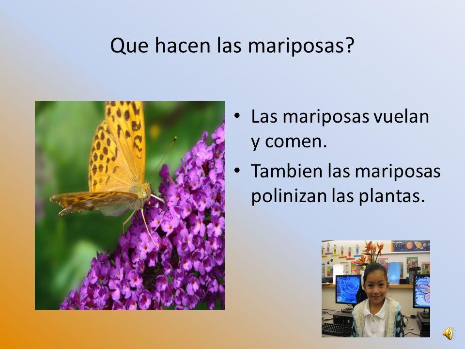 Que hacen las mariposas