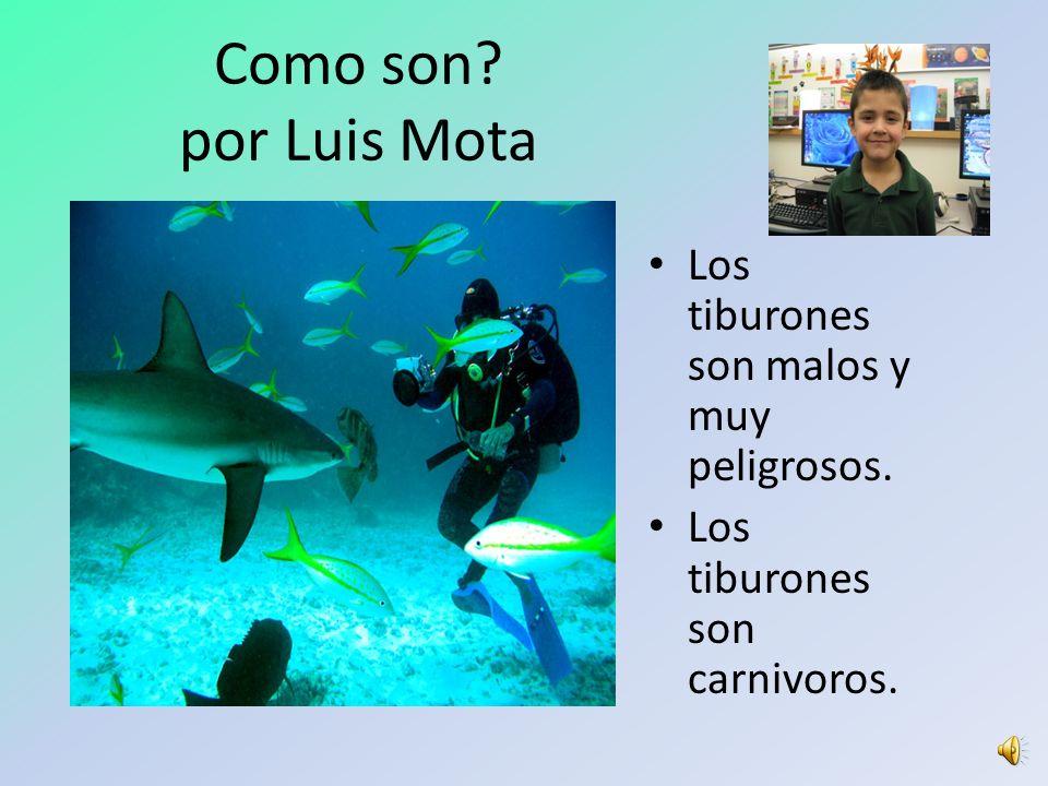 Como son por Luis Mota Los tiburones son malos y muy peligrosos.
