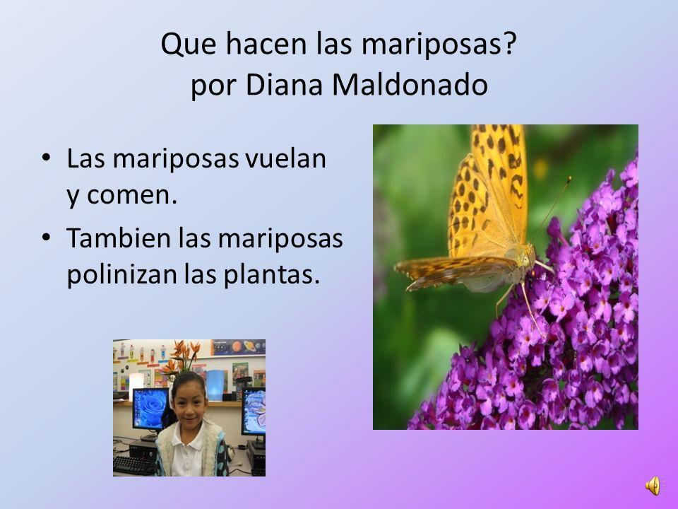 Que hacen las mariposas por Diana Maldonado