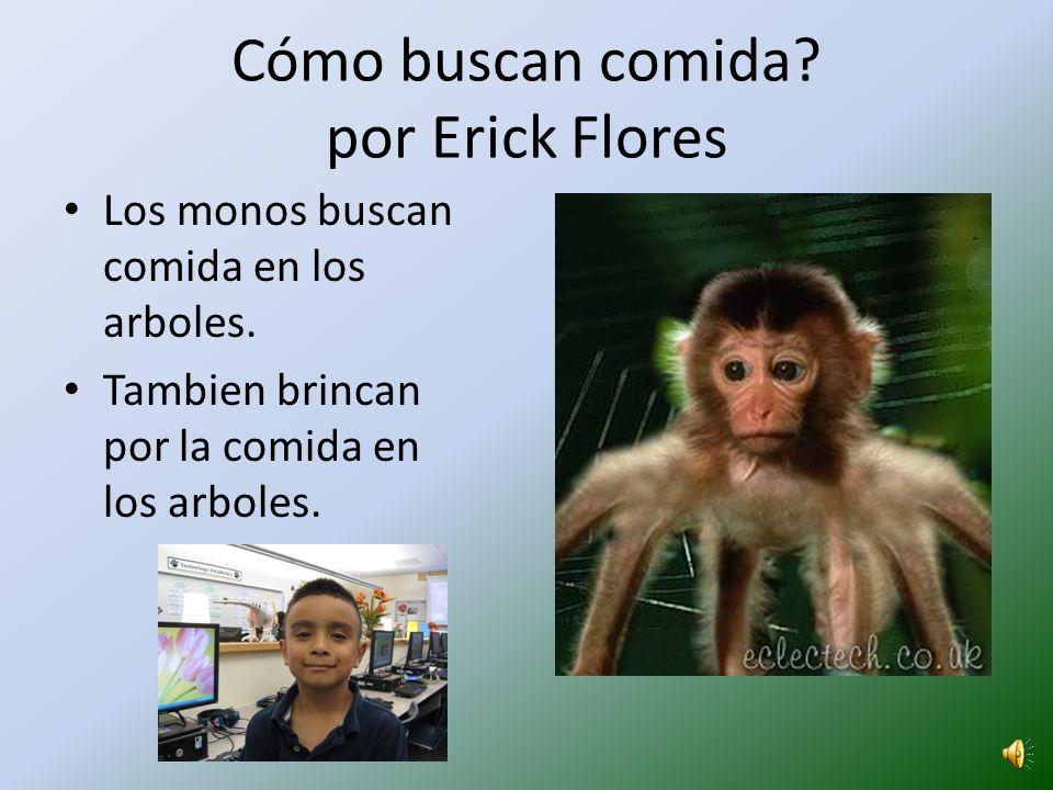 Cómo buscan comida por Erick Flores