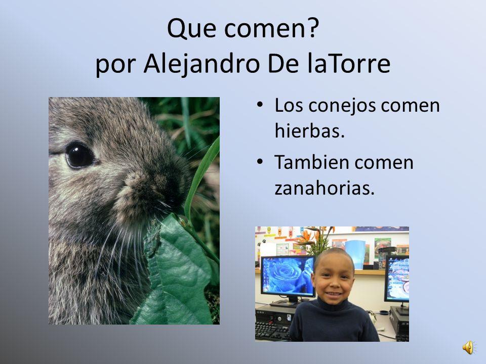 Que comen por Alejandro De laTorre