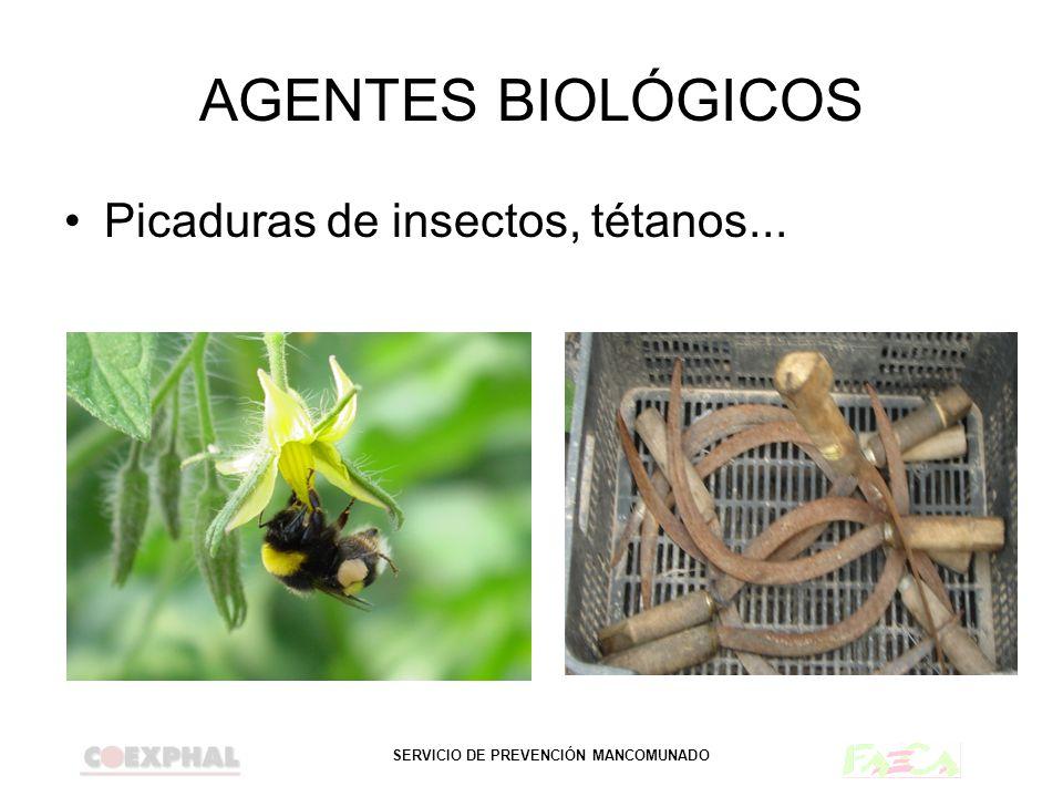AGENTES BIOLÓGICOS Picaduras de insectos, tétanos...