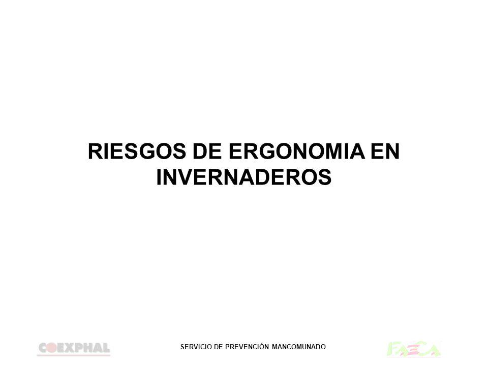 RIESGOS DE ERGONOMIA EN INVERNADEROS