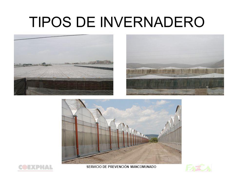 TIPOS DE INVERNADERO PLANO
