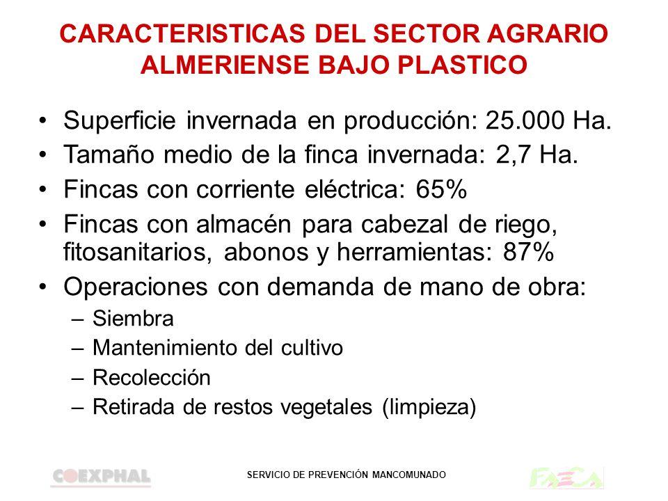 CARACTERISTICAS DEL SECTOR AGRARIO ALMERIENSE BAJO PLASTICO
