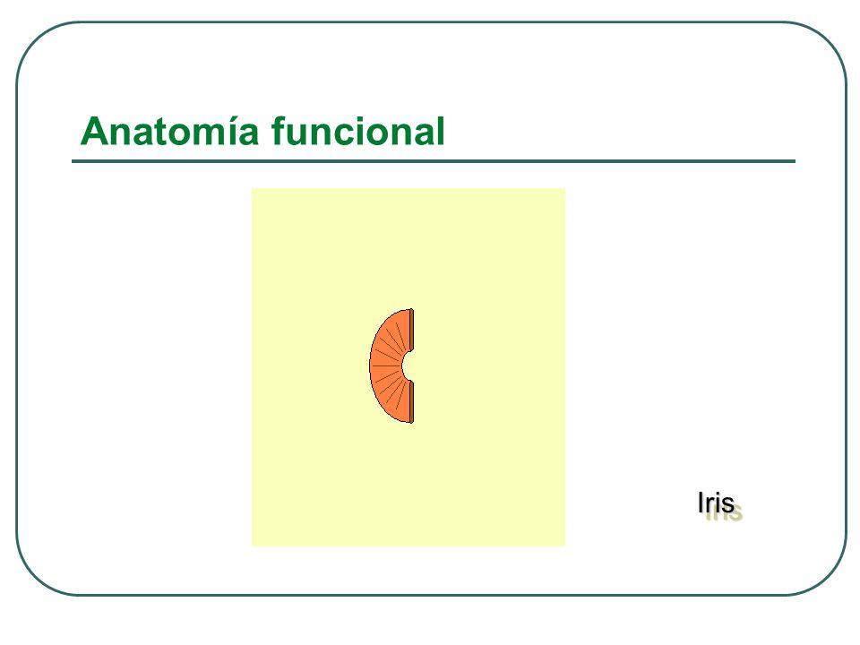 Anatomía funcional Iris