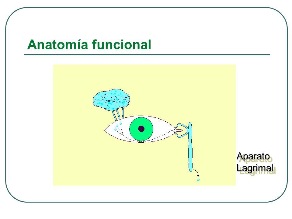 Anatomía funcional Aparato Lagrimal