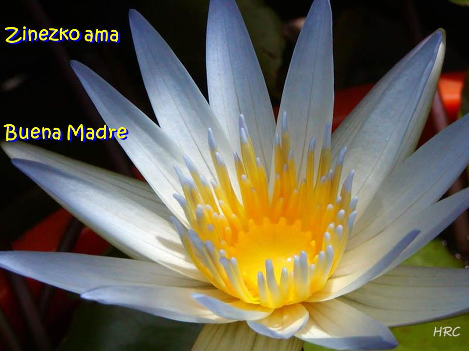 Zinezko ama Buena Madre