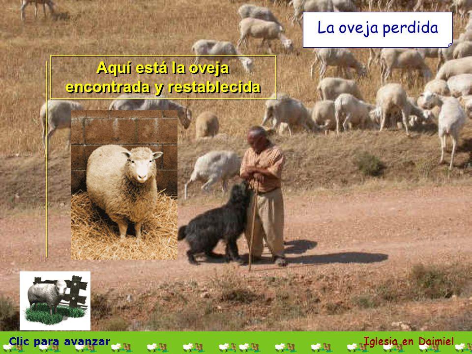 Aquí está la oveja encontrada y restablecida