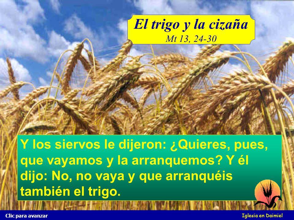 El trigo y la cizaña Mt 13, 24-30.