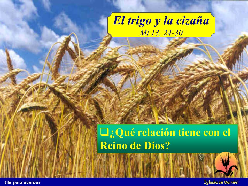 El trigo y la cizaña ¿Qué relación tiene con el Reino de Dios