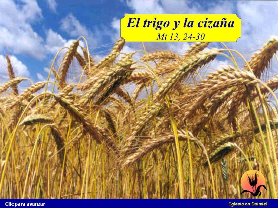 El trigo y la cizaña Mt 13, 24-30 Clic para avanzar Iglesia en Daimiel