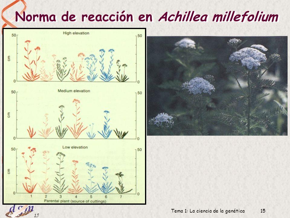 Norma de reacción en Achillea millefolium