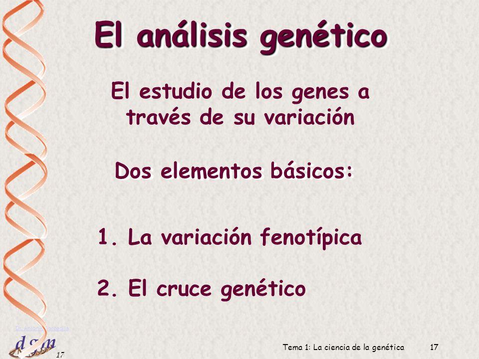 El análisis genético El estudio de los genes a través de su variación