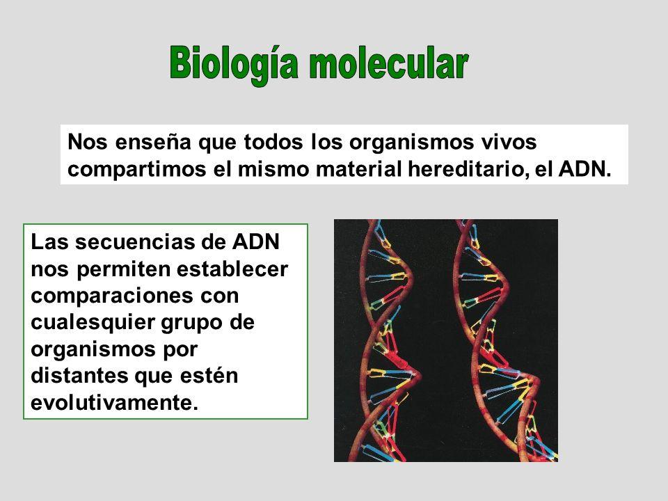 Biología molecular Nos enseña que todos los organismos vivos compartimos el mismo material hereditario, el ADN.
