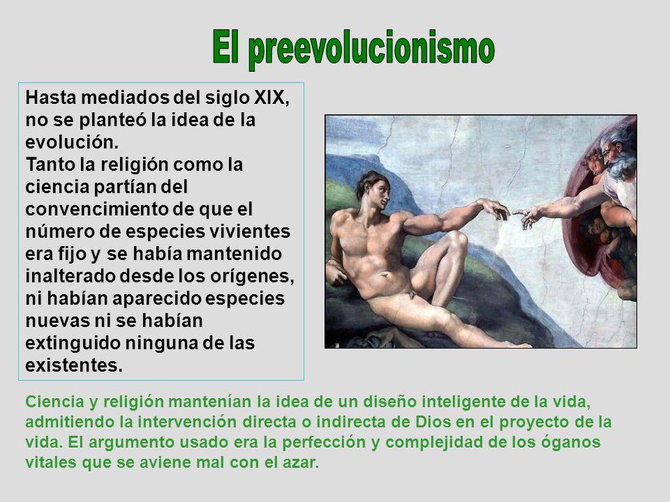 El preevolucionismo Hasta mediados del siglo XIX, no se planteó la idea de la evolución.