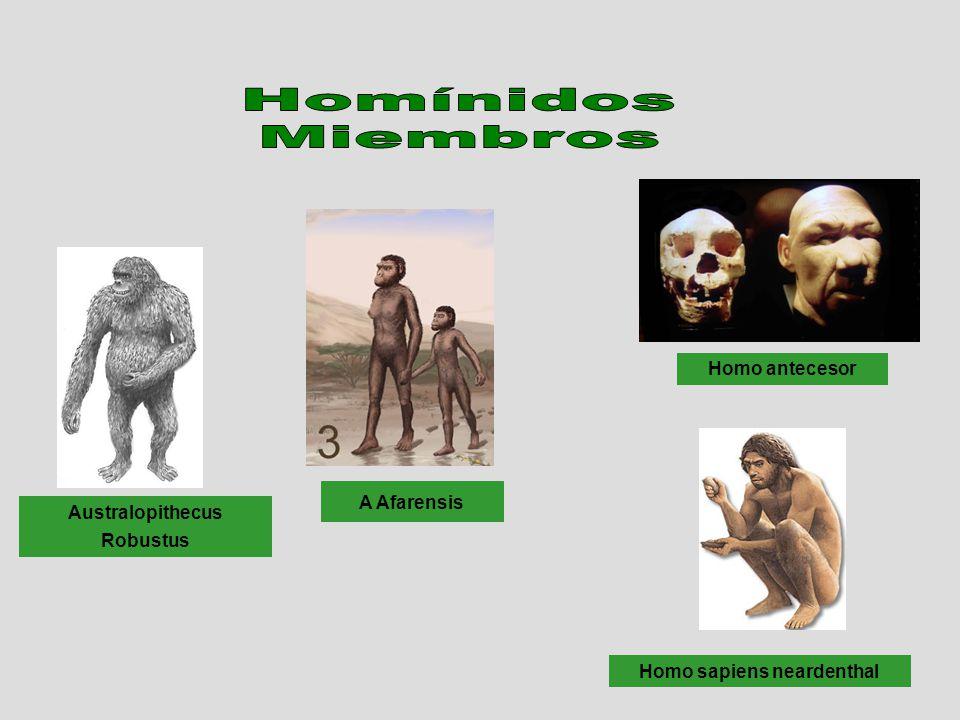 Homo sapiens neardenthal
