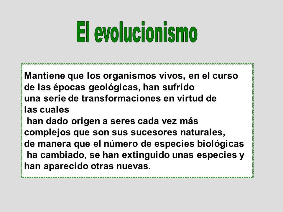 El evolucionismo Mantiene que los organismos vivos, en el curso