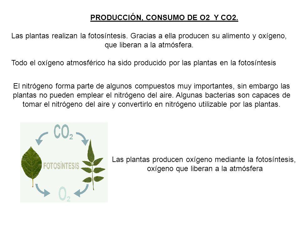 PRODUCCIÓN, CONSUMO DE O2 Y CO2.