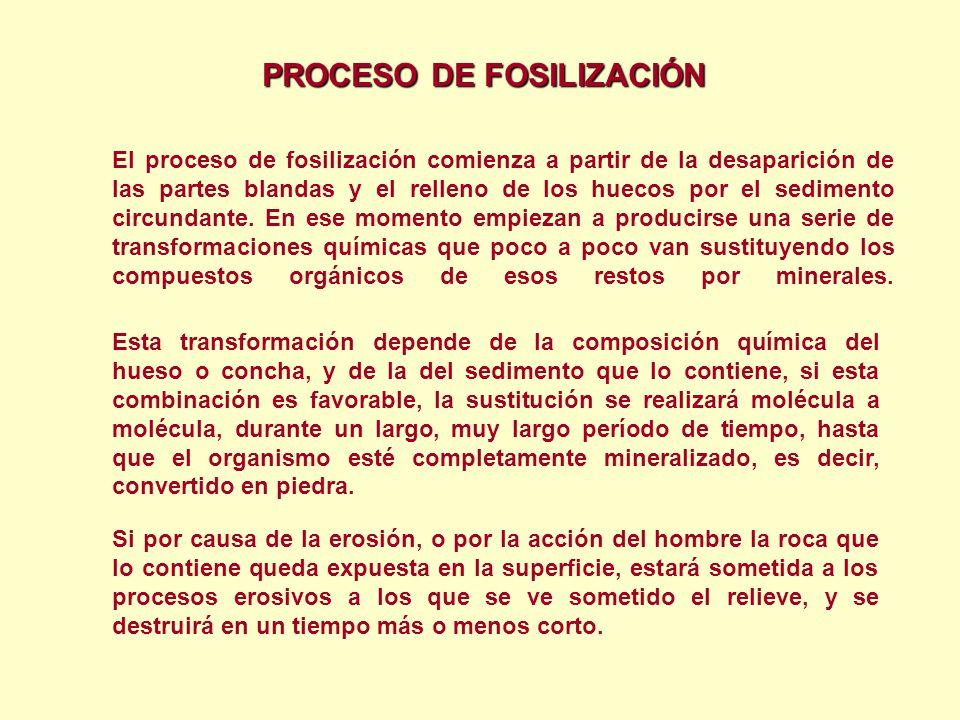 PROCESO DE FOSILIZACIÓN