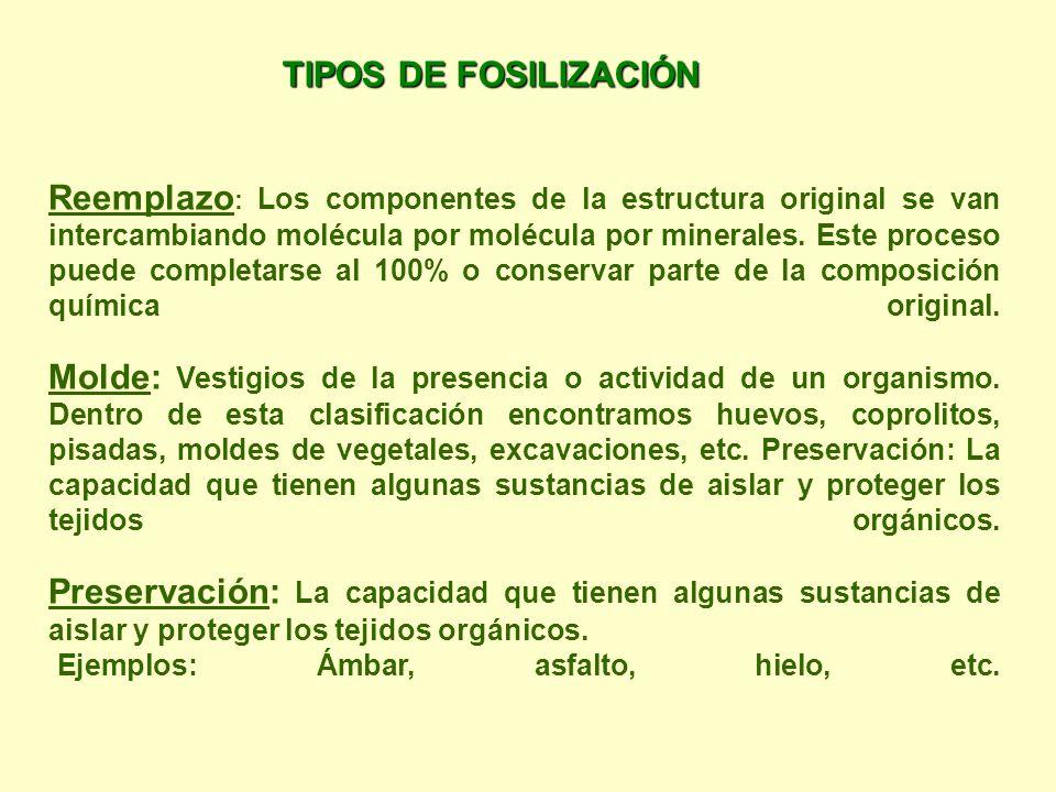 TIPOS DE FOSILIZACIÓN Ejemplos: Ámbar, asfalto, hielo, etc.