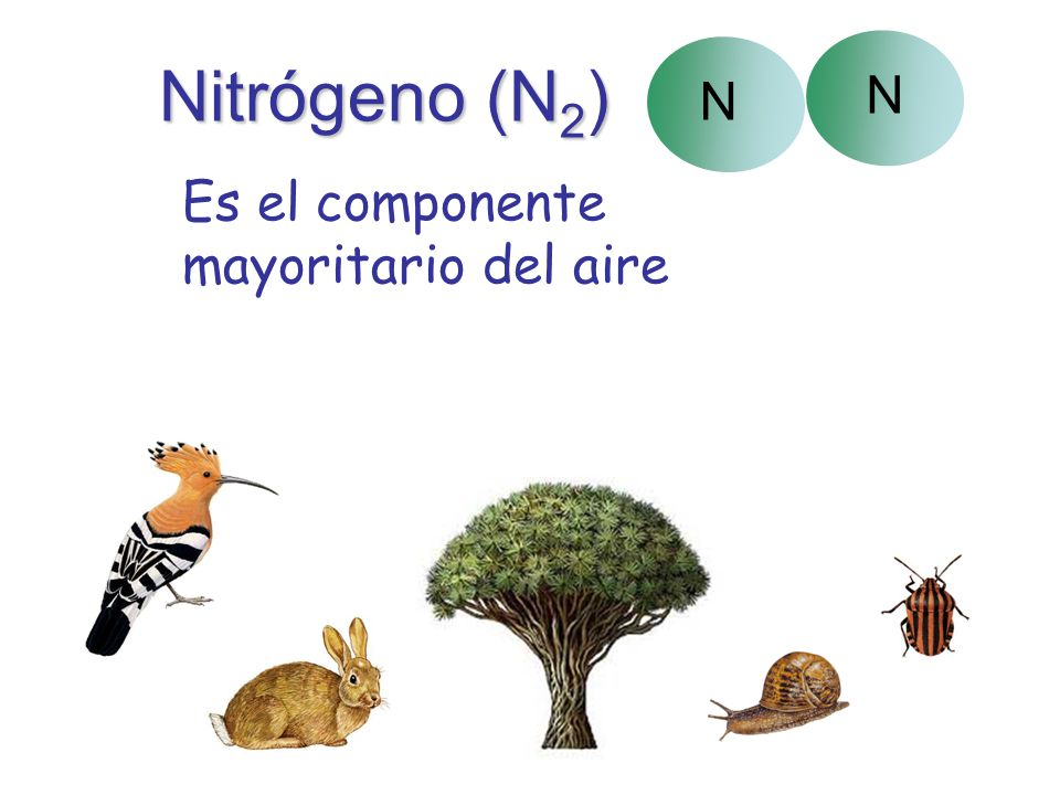 Nitrógeno (N2) N Es el componente mayoritario del aire