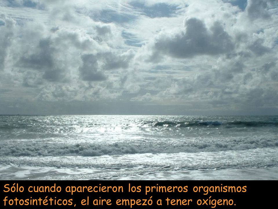 Sólo cuando aparecieron los primeros organismos fotosintéticos, el aire empezó a tener oxígeno.