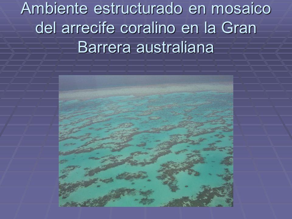 Ambiente estructurado en mosaico del arrecife coralino en la Gran Barrera australiana