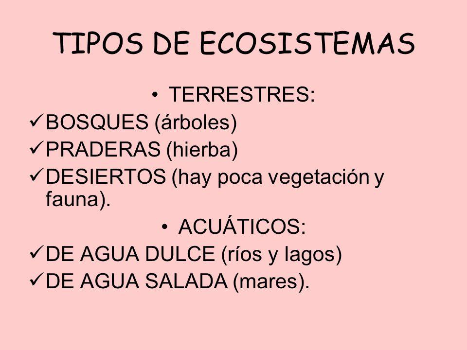 TIPOS DE ECOSISTEMAS TERRESTRES: BOSQUES (árboles) PRADERAS (hierba)