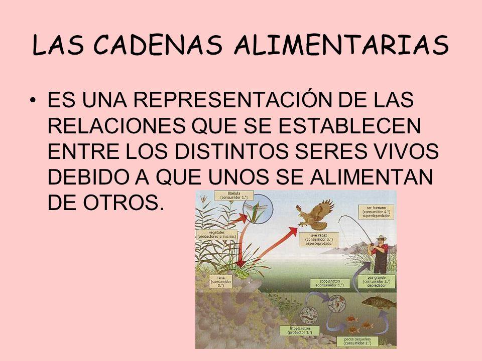 LAS CADENAS ALIMENTARIAS