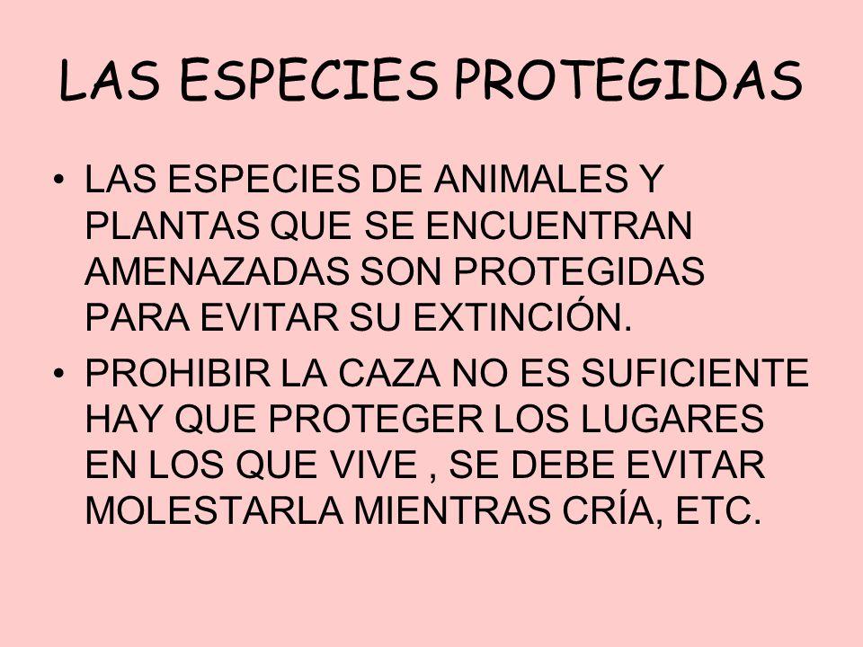 LAS ESPECIES PROTEGIDAS