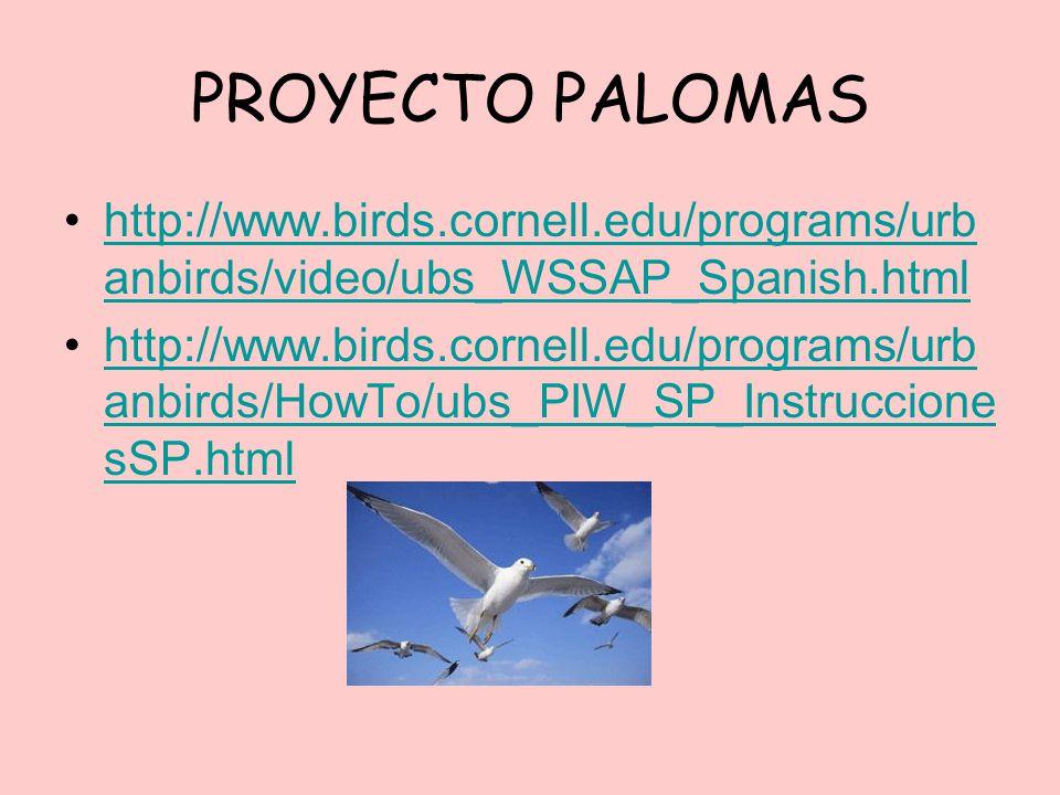 PROYECTO PALOMAS http://www.birds.cornell.edu/programs/urbanbirds/video/ubs_WSSAP_Spanish.html.