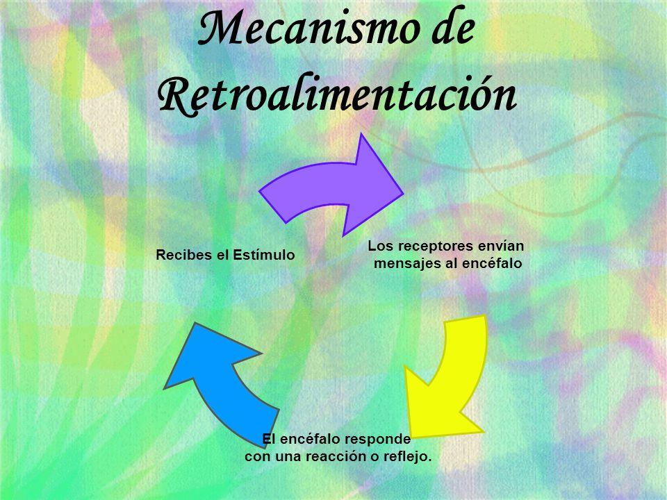 Mecanismo de Retroalimentación