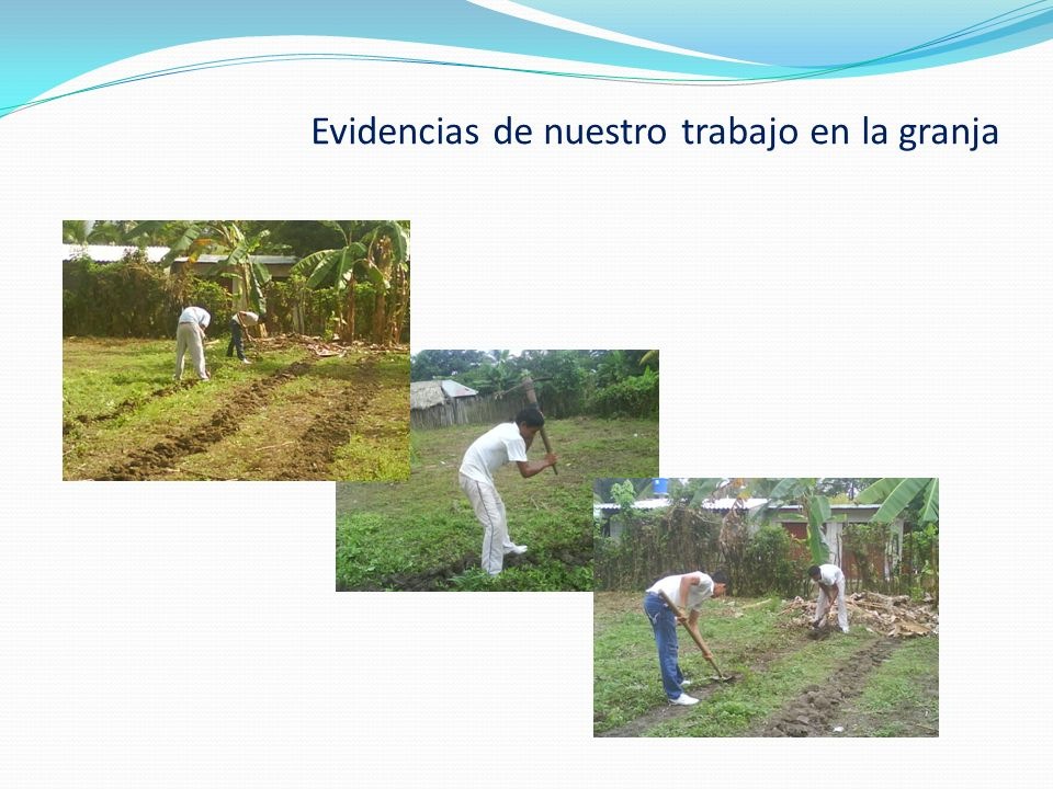Evidencias de nuestro trabajo en la granja